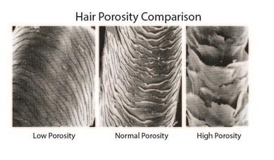 hair porosity hair cuticle